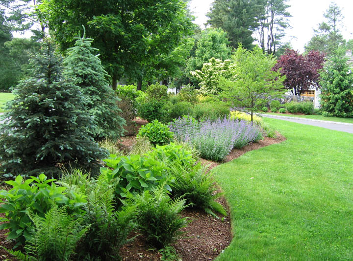 Privacy shrub border landscape design petrowgardens fairfield county ct - Shrubbery for privacy ...